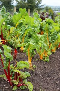 Organice vegetables from Nick & Mairead's farm in Carlow